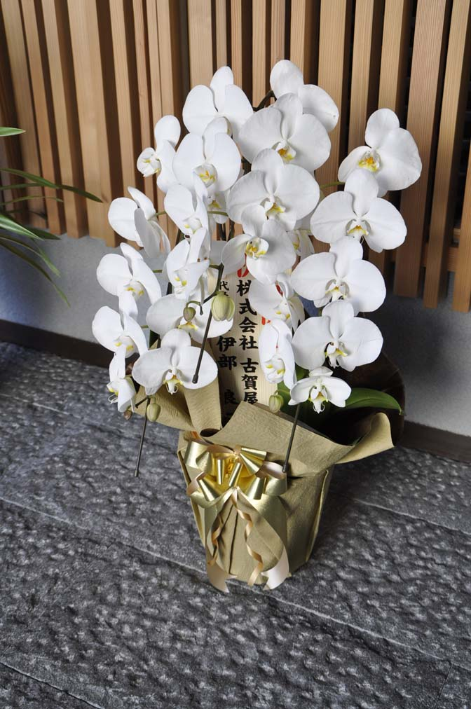 DSC1237-3 たくさんのお祝いをいただきありがとうございます。 名古屋の完全予約制オーダースーツ専門店DEFFERT