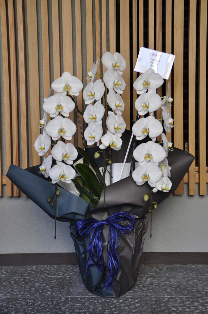 DSC1244-2 たくさんのお祝いをいただきありがとうございます。 名古屋の完全予約制オーダースーツ専門店DEFFERT