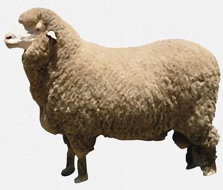 wool スーツ生地に使われるウールについて